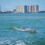 Voir les dauphins Miami avec croisiere Miami en Français