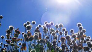 gites de groupe sud ouest : Le bonheur dans la nature